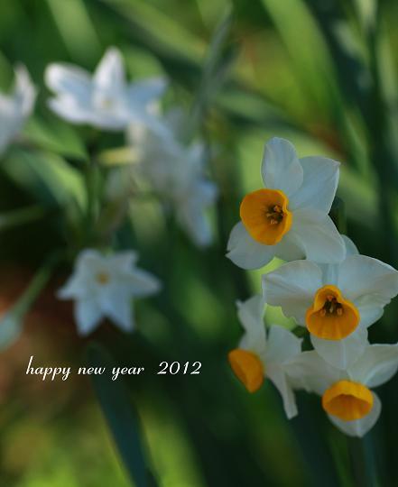 2012 謹賀新年_e0158857_114329.jpg