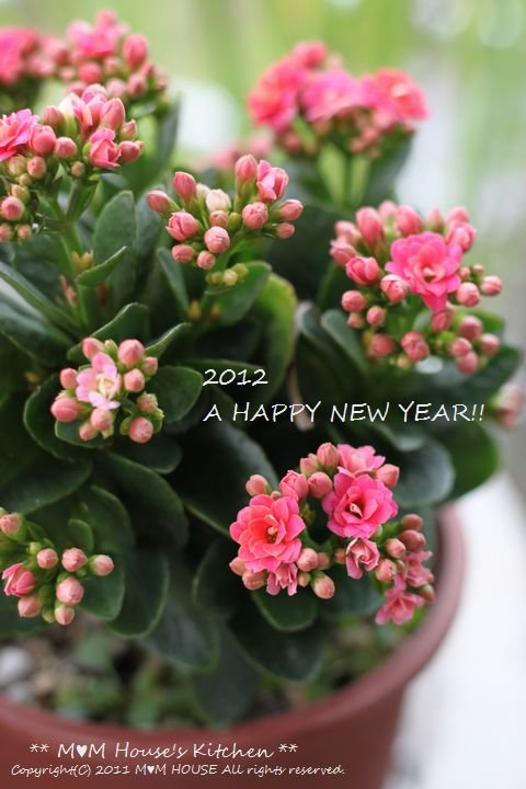 HAPPY NEW YEAR♪♪_c0139375_10552484.jpg