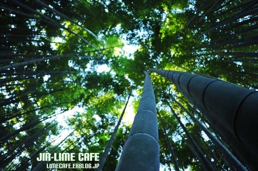 竹林を見上げて_e0222506_2352950.jpg
