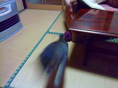 b0062010_1695043.jpg