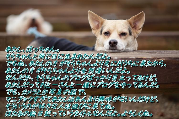b0249720_0442860.jpg
