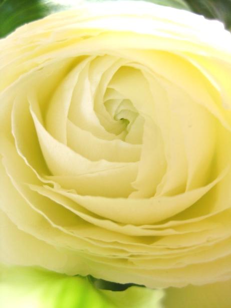 飾り花_a0022951_168437.jpg