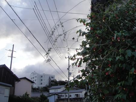 孫台風去る_c0108460_1241183.jpg