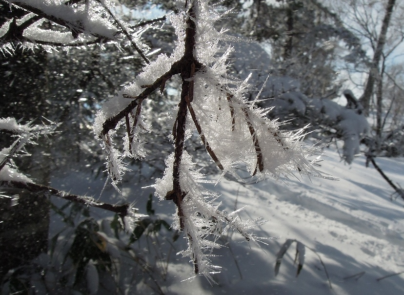 1月2日、イチャンコッペ山-その1-_f0138096_17422872.jpg