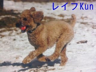 1月3日のお友達_d0148408_1854876.jpg
