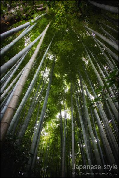 日本的な風景_f0100215_182743.jpg