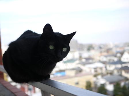 世界平和猫 のぇる編。_a0143140_23542158.jpg