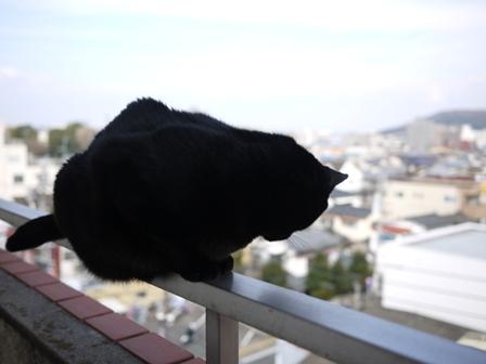 世界平和猫 のぇる編。_a0143140_23552297.jpg