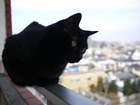 世界平和猫 のぇる編。_a0143140_23564650.jpg