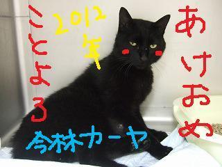 謹賀新年☆_b0059154_17195177.jpg