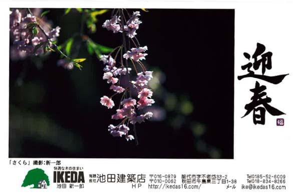 迎春_f0150893_1749396.jpg
