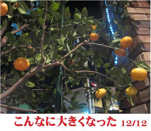 f0214327_1616536.jpg
