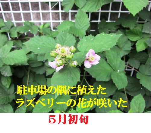 f0214327_16444360.jpg