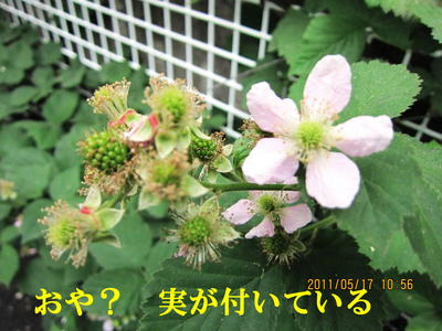 f0214327_1645472.jpg