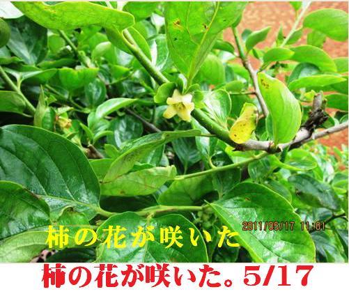 f0214327_1704843.jpg