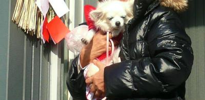 愛犬はなのお正月_c0087349_18281018.jpg
