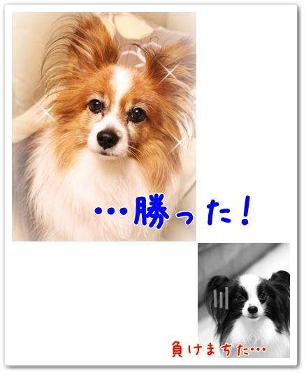 d0013149_22495746.jpg