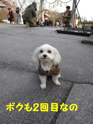 b0193480_15501734.jpg