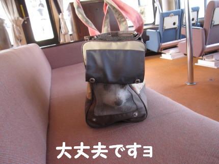 b0193480_1672384.jpg