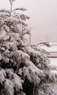 昨夜の雪_d0074108_19122299.jpg
