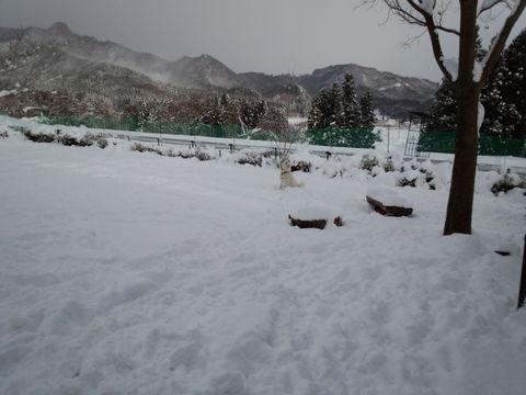 大雪ダァ〜〜 _d0148408_2214147.jpg