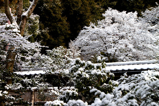 雪の金閣寺_e0048413_21453369.jpg