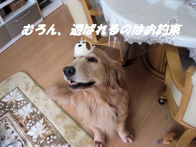 a0149240_1340751.jpg