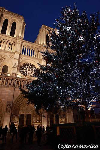 ノートルダム寺院のクリスマスツリー_c0024345_7225275.jpg