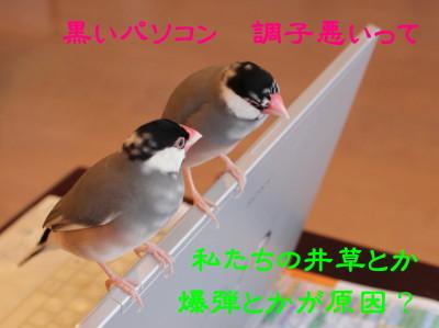 b0158061_15572012.jpg