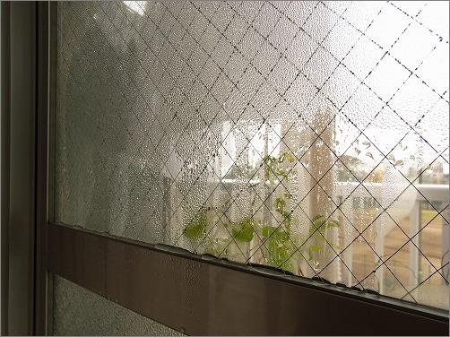 【 冬の朝は窓の結露拭きが日課 】_c0199166_23223983.jpg