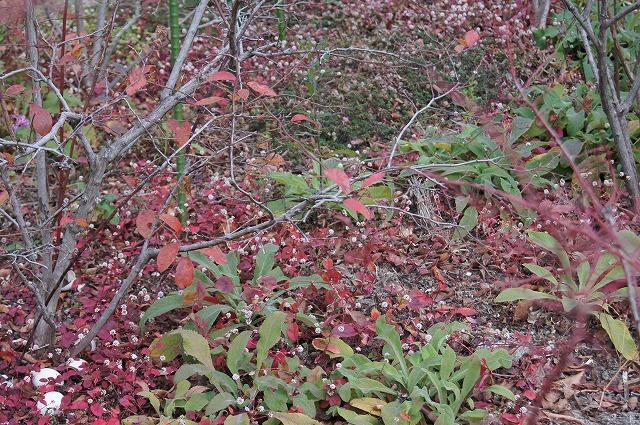 1月のブルーベリー畑_e0181373_1959373.jpg