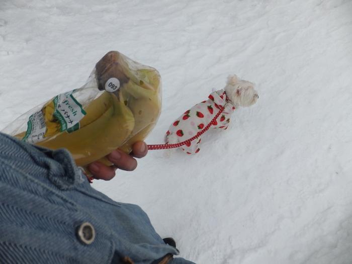 クララと雪の散歩道_c0226202_16145353.jpg