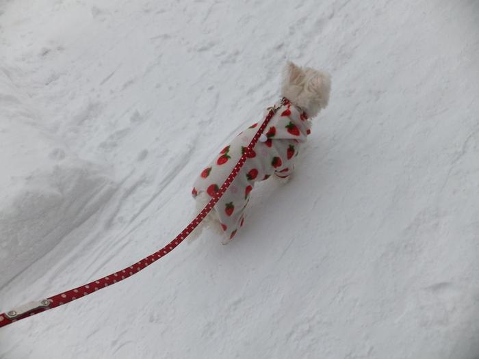 クララと雪の散歩道_c0226202_1683450.jpg