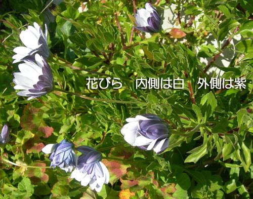 f0029921_22203181.jpg