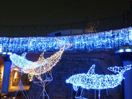晴海トリトンのクリスマスイルミネーションなど_c0060143_1423127.jpg