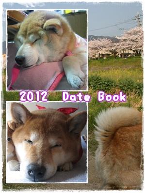 (遅ればせながら)2012年が明けました。_c0049950_25565.jpg