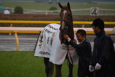 2011年度JRA賞発表、年度代表馬はオルフェーヴル_b0015386_2155177.jpg