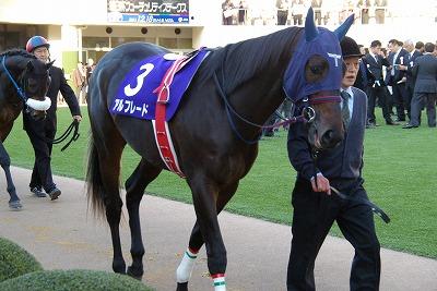 2011年度JRA賞発表、年度代表馬はオルフェーヴル_b0015386_21553044.jpg