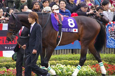 2011年度JRA賞発表、年度代表馬はオルフェーヴル_b0015386_21562130.jpg