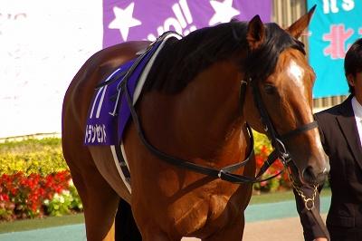 2011年度JRA賞発表、年度代表馬はオルフェーヴル_b0015386_21573231.jpg