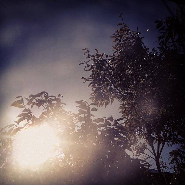 in my window_b0060102_1447932.jpg