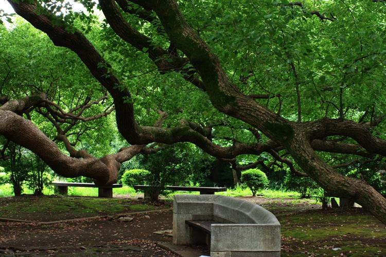東京大学の風景_b0053019_21435771.jpg