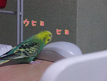 f0196665_21352725.jpg
