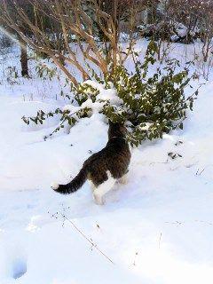 あぁ、ネコよ。_d0014014_2016563.jpg