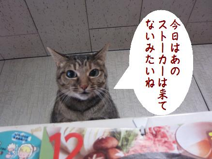 b0151748_17253971.jpg