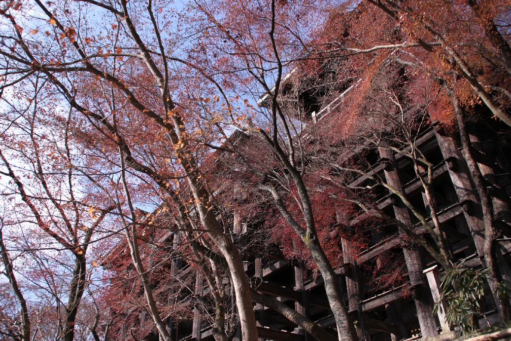 京都 4日目 2012年元旦_f0158364_15263014.jpg