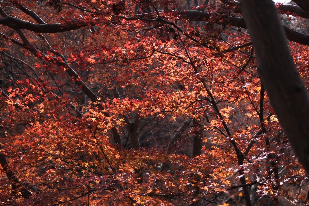 京都 4日目 2012年元旦_f0158364_15263710.jpg