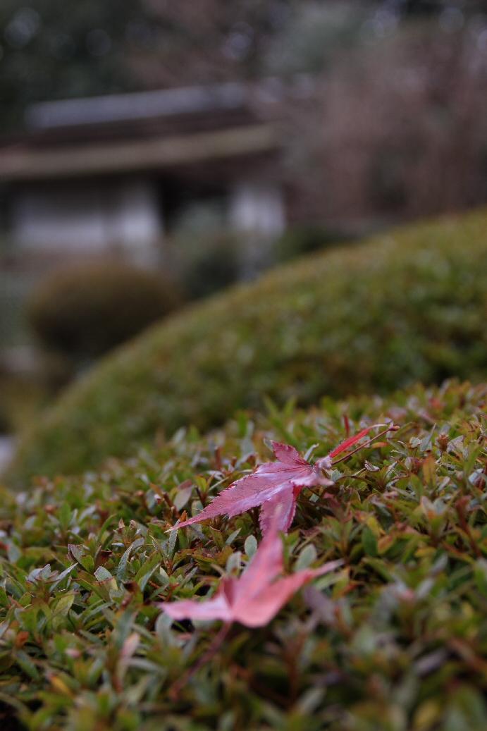京都 5日目_f0158364_1651156.jpg