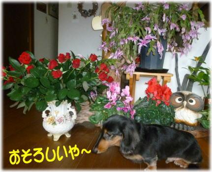 結婚式へGO~_c0058727_10114231.jpg