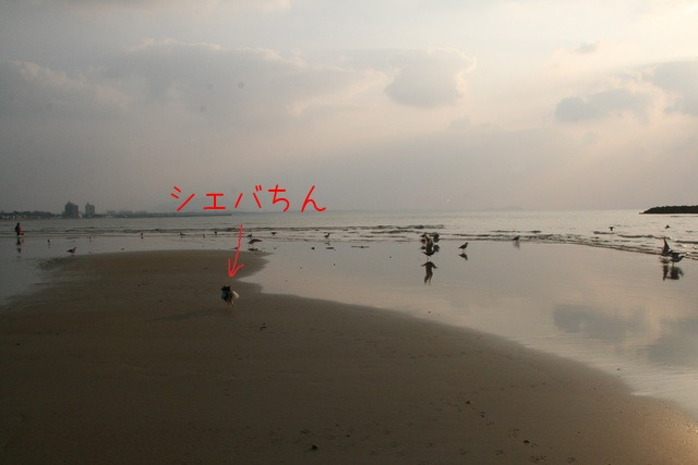 b0137459_22221265.jpg